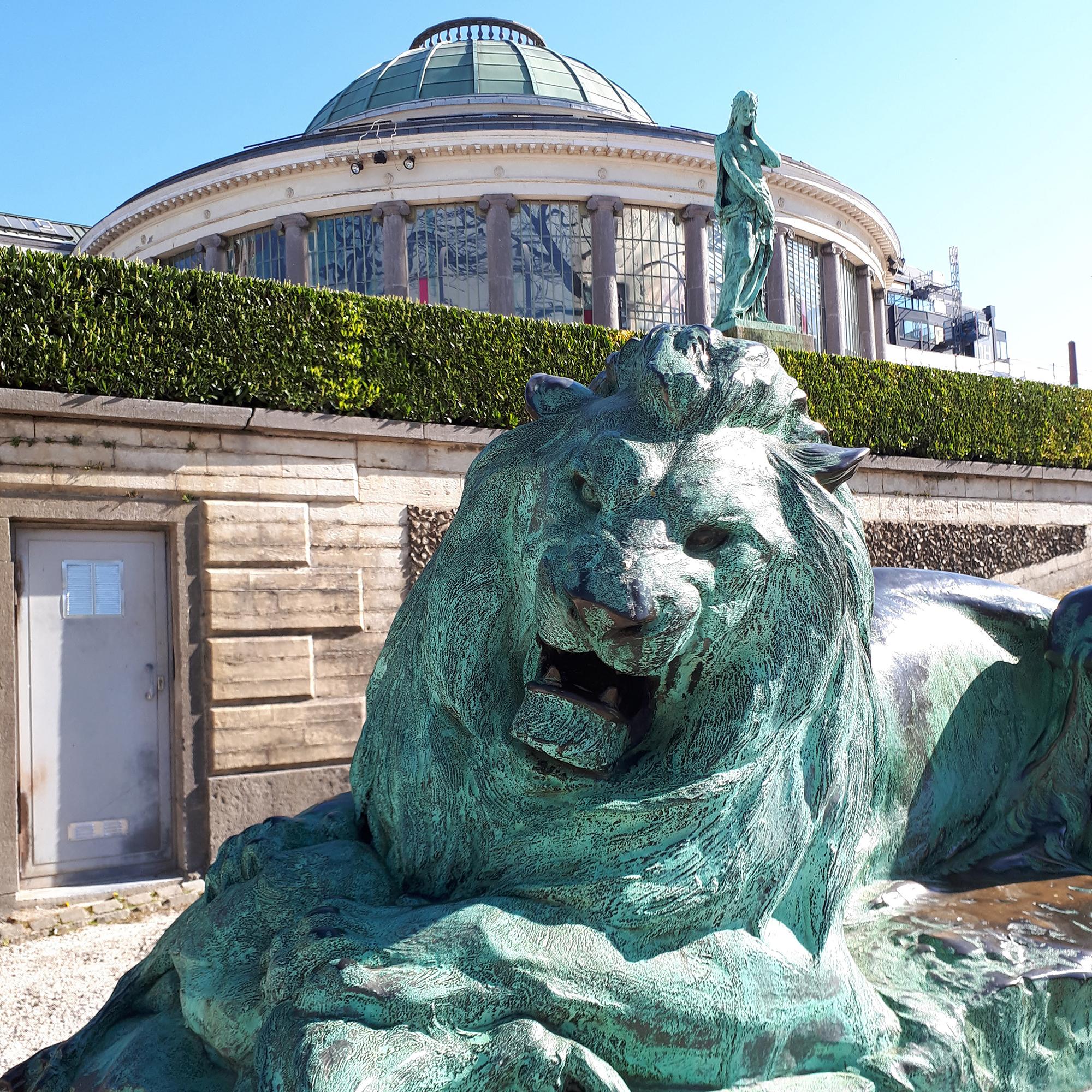 06 le lion